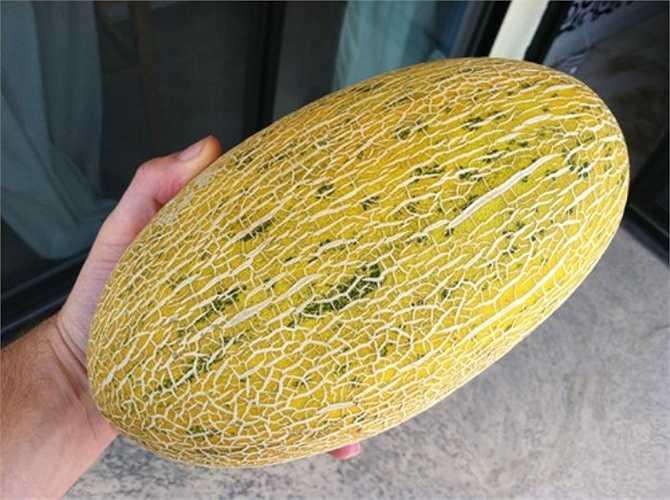 Ngoài ra còn có dưa vàng Hami còn được gọi là dưa tuyết, có nguồn gốc từ Tân Cương (Trung Quốc), trái to, hình bầu dục, các vết lưới trên dưa rõ, màu trắng, đan xen.