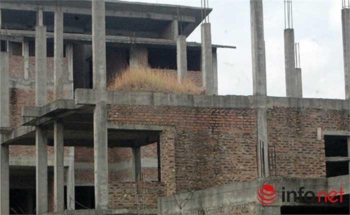 Cỏ mọc trên trần của những ngôi biệt thự đang xây dựng giang dở.