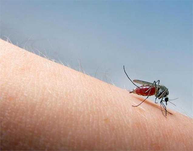 Tránh nơi ở của muỗi: Không nên đứng ở nơi có nhiều muỗi. Trong trường hợp đi cắm trại thì nên tránh cắm trại ở những nơi có muỗi nhiều hoặc nước tù đọng.
