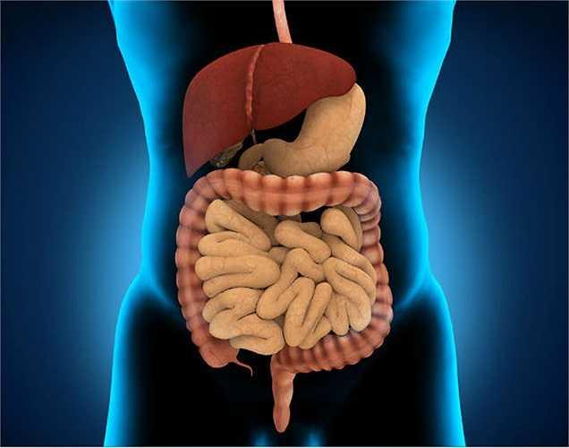 Tiêu hóa: Mát xa bụng giúp duy trì sức khỏe đường tiêu hóa lâu dài. Bạn sẽ không bị táo bón hoặc đầy hơi. Cơ bụng của bạn sẽ vẫn săn chắc và sẽ không bị đau. Massage bụng làm tăng lưu thông máu và giúp tiêu hóa thức ăn.