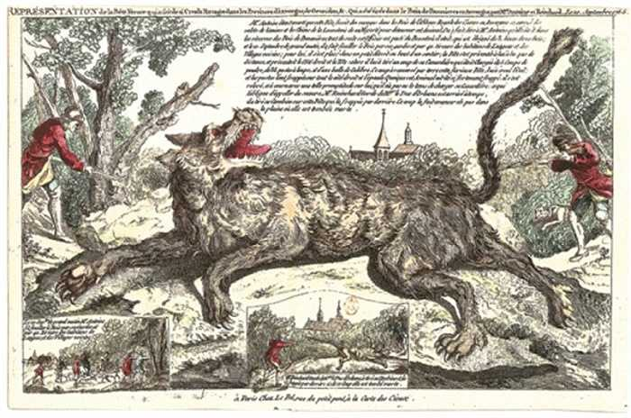 Khi bắt gặp con người cùng một bầy cừu, quái thú Gauvedan chỉ lao tới tấn công con người đến chết và ăn thịt tại chỗ.
