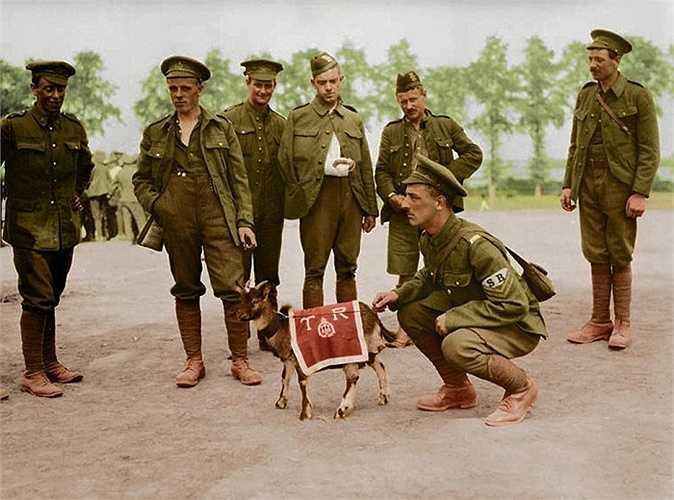 Lính bộ binh Canada chụp ảnh cùng linh vật đơn vị của họ. Trong cuộc chiến khốc liệt, những con vật cưng trở thành thứ khích lệ tinh thần chiến đấu của binh lính