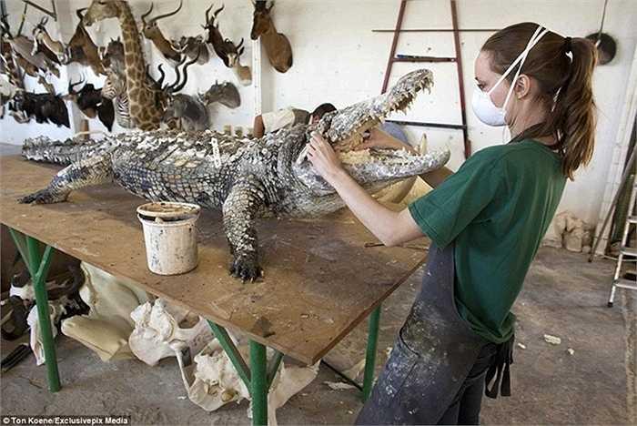 Nữ công nhân này đang hoành thành một mô hình cá sấu giống y như thật.