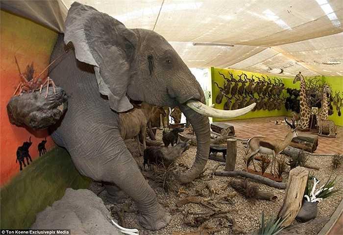 Chiếc đầu voi treo tường khổng lồ của xưởng Louw Mel có giá bán lên tới gần 1 tỷ đồng.