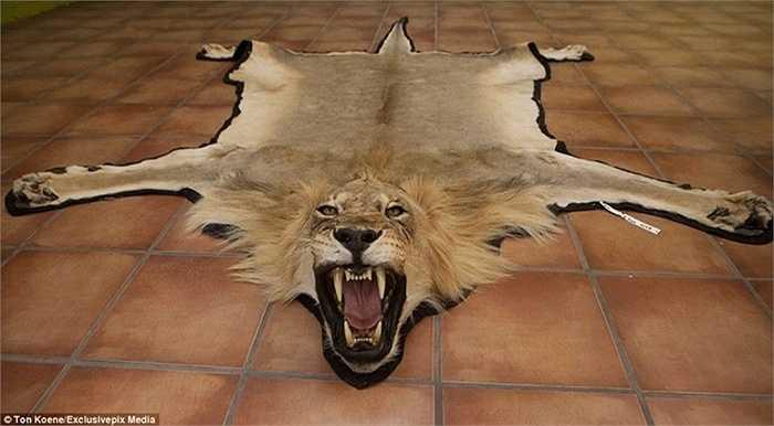 Một chiếc thảm sư tử dữ tợn được sản xuất từ nhà xưởng được nhiều đại gia săn lùng.