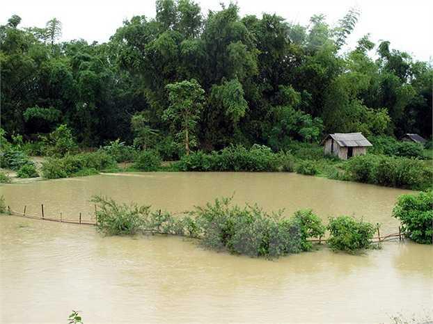 Nhiều ao cá của các hộ dân ở Điện Biên ngập sâu trong nước. (Ảnh: Chu Quốc Hùng)