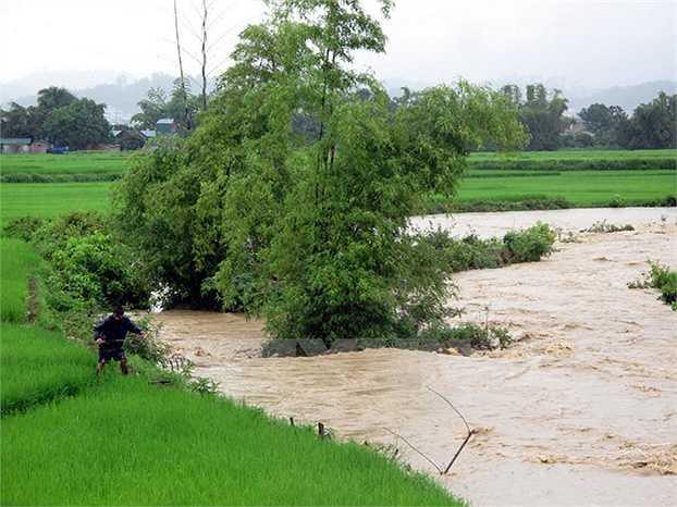 Ruộng lúa của nhiều hộ dân bị nước lũ cuốn trôi. (Ảnh: Chu Quốc Hùng)