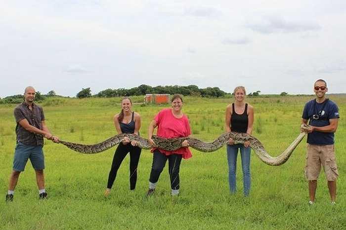 Phải cần tới 5 người mới có thể nâng được con trăn khổng lồ này. Nó là một con trăn Miến Điện được cho là lớn thứ hai tại bang Florida.