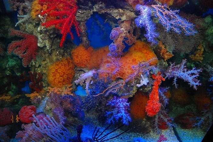 Đáy đại dương là nơi ánh sáng mặt trời không thể chiếu tới nhưng một số vi khuẩn  vẫn có khả năng quang hợp để sản xuất ra thức ăn nhờ vào ánh sáng mờ ở miệng núi lửa