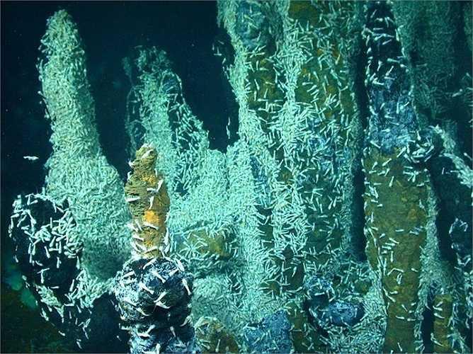 Ở độ sâu 304,8m dưới đáy biển các nhà khoa học cho rằng không có vi khuẩn nào có thể sống sót, nhưng họ đã sai lầm. Bằng cách khoan lớp bùn đất, họ đã phát hiện một số vi khuẩn đã ăn những thức ăn còn sót lại từ hàng triệu năm trước