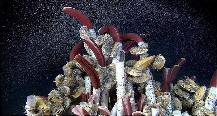 Loài giun sống trên miệng núi lửa dưới đáy biển này không có miệng và hệ tiêu hóa nhưng vẫn có thể phát triển trong một khoảng thời gian dài