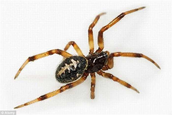 Sau khi cảm thấy nhói ở chân, Aideen nhanh chóng nhảy ra và quăng tấm khăn trải giường. Nọc độc của con nhện khiến mắt cá chân và bắp chân khiến chân của Aideen sưng to gấp đôi.