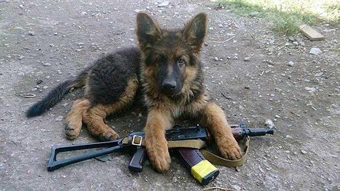 Chó con nằm bên cạnh súng trường của một binh sỹ Ukraine