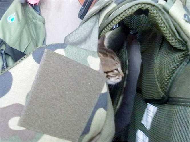 Giấc ngủ tranh thủ của mèo con bên trong bộ giáp của chủ nhân