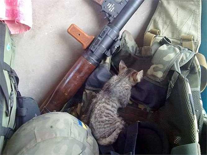 Chú mèo ngồi nhẹ nhàng giữa bộ giáp và khẩu súng RPG