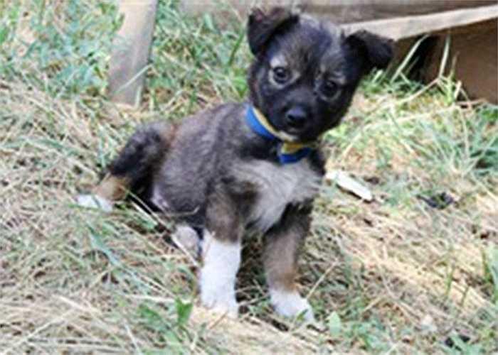 Chó con đeo vòng cổ màu cờ Ukraine ở tiền tuyến