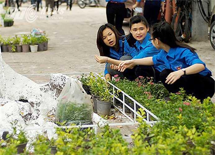 Cách đây 4 tháng, hàng trăm Thanh niên tình nguyện của Thành Đoàn Hà Nội rầm rộ ra quân tổ chức trồng cây trang trí trên dọc tuyến đường Bà Triệu (Hoàn Kiến, Hà Nội).
