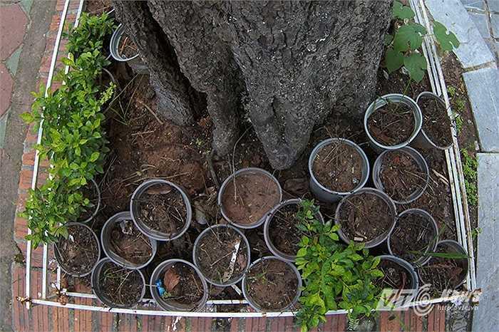 Có đến 2/3 số hoa trong bồn cây này đã bị chết khô, chỉ còn trơ lại chậu cây.