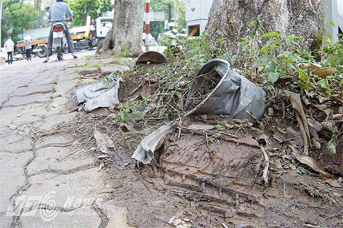 Một số chậu cây còn bị vếp lốp ôtô, xe máy chèn qua.