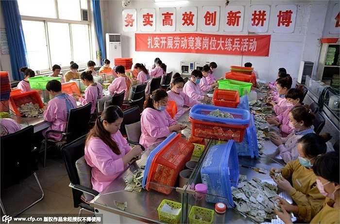 Số lượng nhân viên kiểm đếm tiền hàng chục người, ngồi trong nhiều tiếng đồng hồ