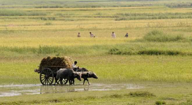 Ở các vùng quê nghèo tại Ấn Độ, người dân vẫn hết sức mê tín