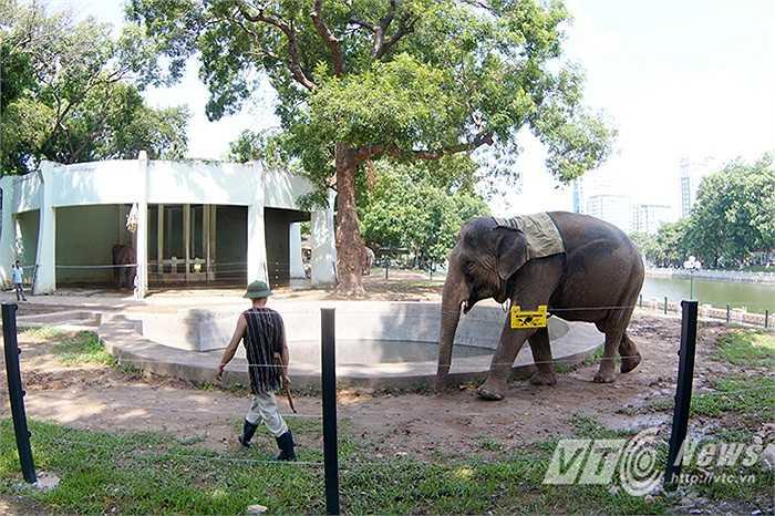 Ba cá thể voi ở vườn thú Hà Nội lần lượt có tên là Thái, Banang và H Khun. Thái ở vườn thú từ năm 2010, còn Banang và H Khun được chuyển từ Đắk Lắc từ năm 2014.