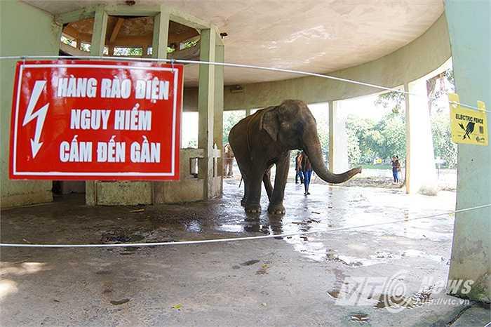 Với mục đích đem lại cuộc sống tự do, được thoải mái đi lại trong khu nuôi tự nhiên bán hoang dã,  cho những cá thể voi, Tổ chức Động vật Châu Á (AAF) và Tổ chức Thay đổi vì Động vật (CFAF) đã tặng Vườn thú Hà Nội công trình hàng rào điện cho khu chăm sóc voi.