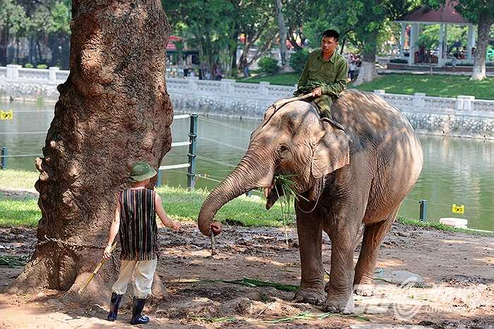 Công trình giúp cho ba cá thể voi đang được chăm sóc tại vườn thú thay vì bị xích nhốt nhiều tiếng trong ngày giờ được tự do di chuyển trong khu bán tự nhiên rộng 1500 m2 ngay bên bán đảo hướng ra hồ Thủ Lệ.