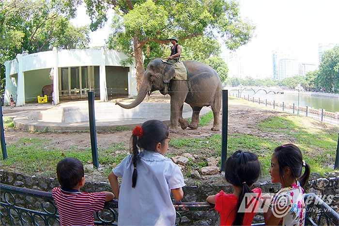 Từ nay các em nhỏ đã có thể được ngắm những chú voi thoải mái đi lại, tự do hoạt động.