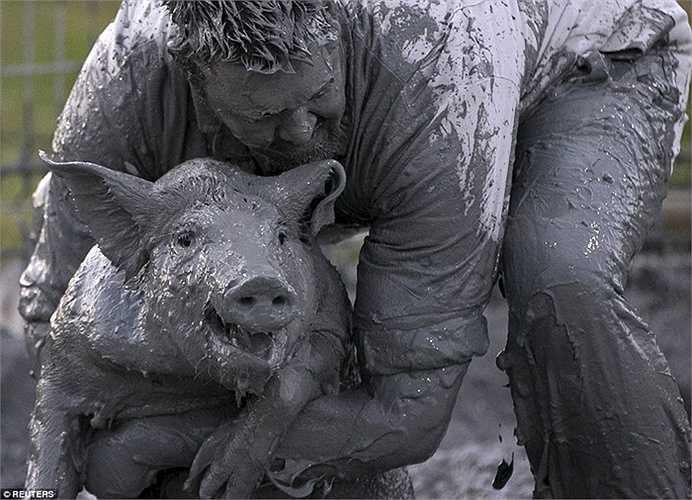 Người tham dự vùi mình trong bùn để tìm cách khống chế lợn