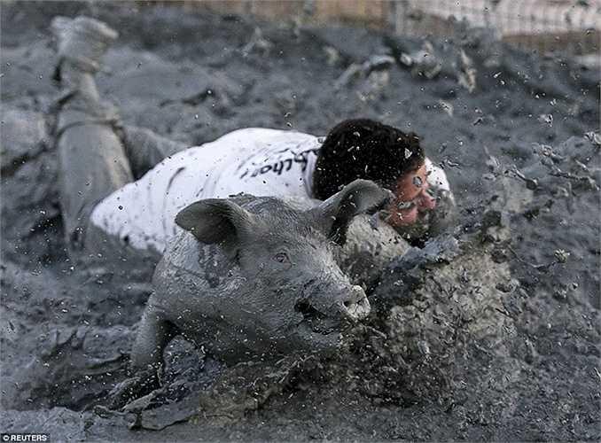 Người thắng cuộc là người bắt được lợn và nhốt vào chuồng