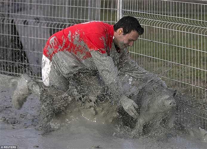 Vùi mình trong bùn để bắt lợn