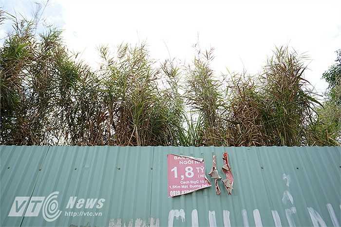 Một tờ quảng cáo rách nát khác trên đường Nguyễn Chánh (Cầu Giấy, Hà Nội)