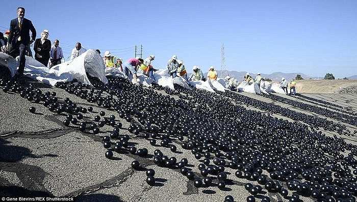 Ngày 11/8, khoảng 20,000 quả bóng đã được thả xuống hồ nước ở khu phức hợp Van Norman