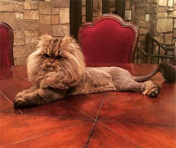 Chú mèo cưng Smushball của 'Ông hoàng Instagram' cũng trở thành một nhân vật vô cùng nổi tiếng trên mạng và được 'ông bầu' mát tay Dan Bilzerian lăng xê. Tài khoản Instagram của Smushball hiện có tới 808.000 người theo dõi
