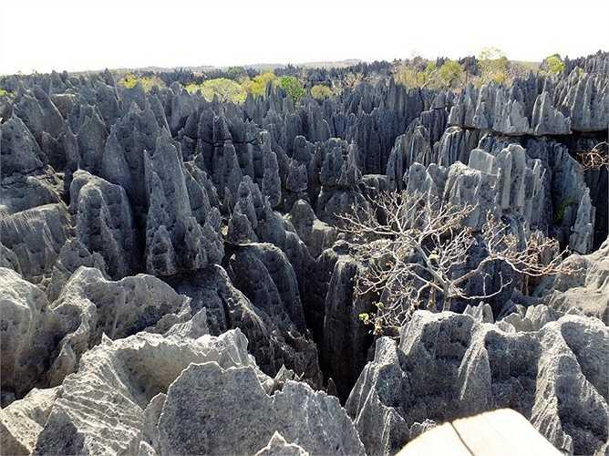 Cao nguyên đá Tsingys Karstic thuộc Vườn quốc gia Tsingy de Bemaraha, Madagascar. Những hnag động và vách đá ở đây có niên đại hàng triệu năm
