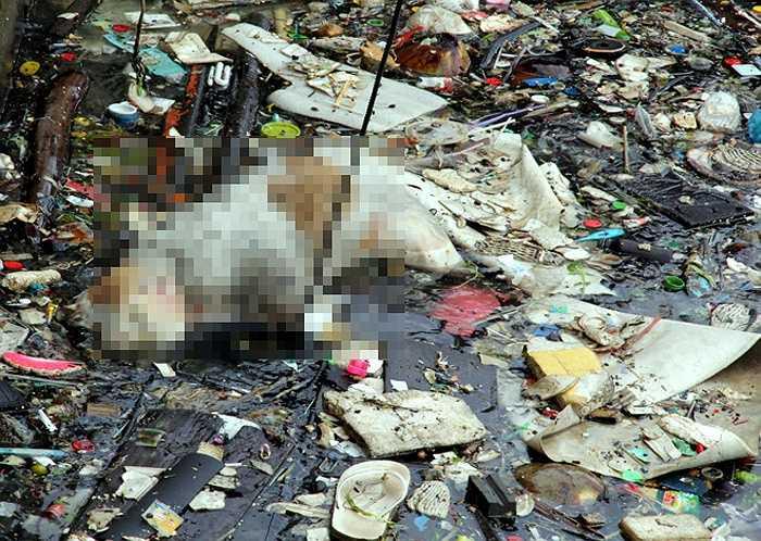 Xác động vật bị vứt xuống biển bốc mùi tử khí nồng nặc. 'Thỉnh thoảng có đợt phát động thanh niên thu gom rác nhưng rồi đâu lại vào đấy', một người dân địa phương cho biết.
