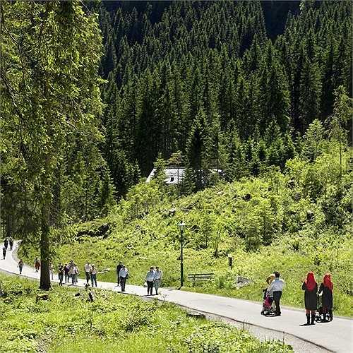 Những con đường núi nhỏ, xung quanh là bạt ngàn thông xanh giữa không khí trong lành hấp dẫn du khách