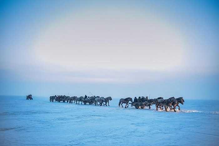 Người dân dẫn đàn ngựa đi trên mặt hồ từ sáng sớm để tìm những điểm có thể đánh được cá