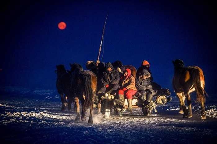 Những ngư dân theo đàn ngựa đi săn cá từ sáng tinh mơ