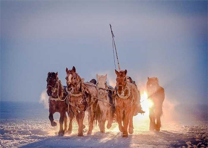 Những chiếc xe ngựa kéo chở ngư dân và dụng cụ của họ