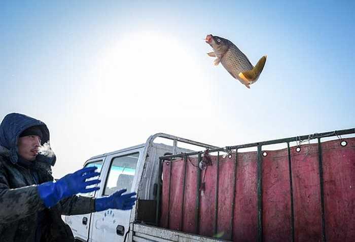 Ngư dân ném con cá mới bắt được xe thùng xe
