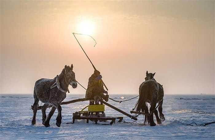 Quất ngựa chạy quang cột thu lưới