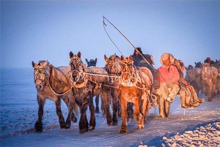 Đàn ngựa và ngư dân tiến vào hồ băng