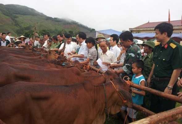 Nơi cực Tây tổ quốc, mặc dù còn nhiều khó khăn nhưng những hộ dân nghèo nhất ở những nơi xa xôi nhất đã tìm thấy niềm tin có thể đuổi được cái nghèo nhờ những con bò giống mà Viettel trao tặng.