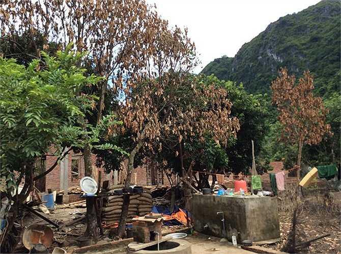 Cây cối chết khô sau thời gian bị ngâm trong nước mưa lũ.