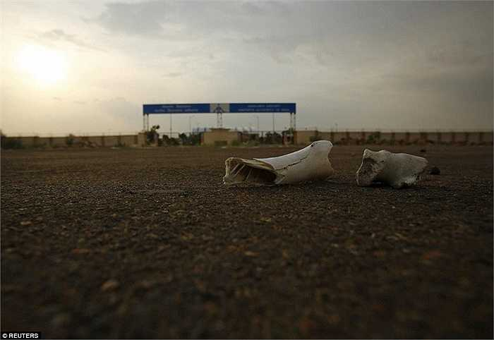 Những mảnh xương động vật bên ngoài sân bay bay bị bỏ hoang