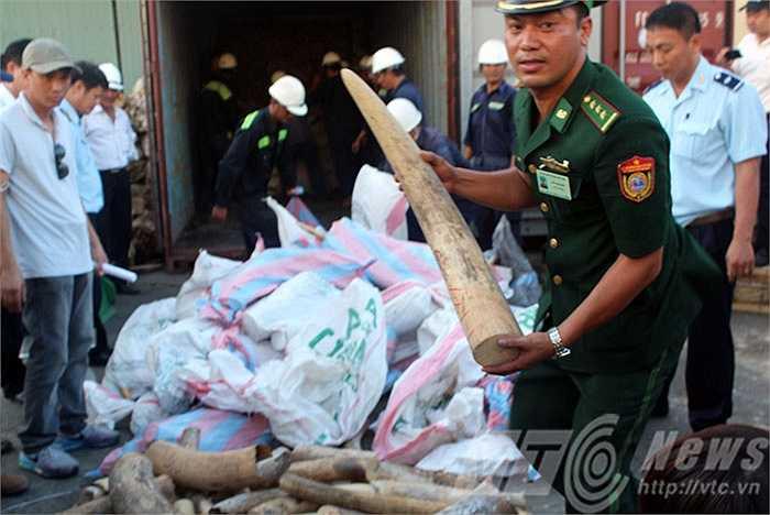 Sau khi khám xét, lực lượng chức năng phát hiện trong 63 bao tải đều chứa ngà voi