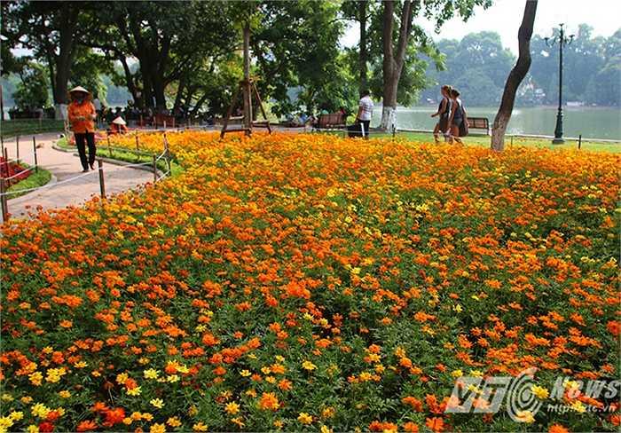 Những thảm hoa đầy màu sắc ven hồ Gươm. (Ảnh: Việt Linh – Nguyễn Long)