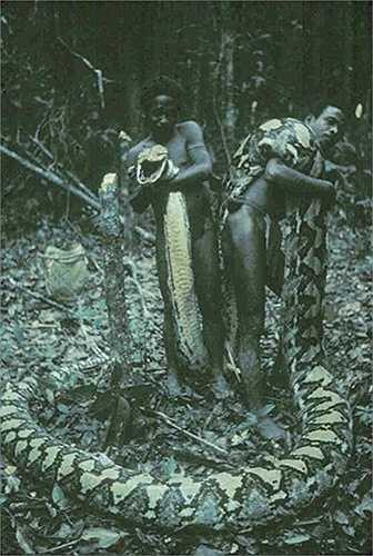 Chiều dài cơ thể của chúng tối đa lên tới 10m, dài hơn khoảng 2 - 3,5 m so với trăn khổng lồ anaconda (loài trăn lớn nhất thế giới về trọng lượng). Chúng có trọng lượng trung bình 159 kg và đạt tuổi thọ lên đến 12 năm.